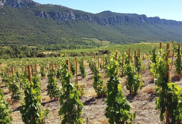 Domaine viticole clés en mains, en conversion BIO.