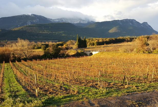 Domaine viticole clé en main en Agriculture Biologique