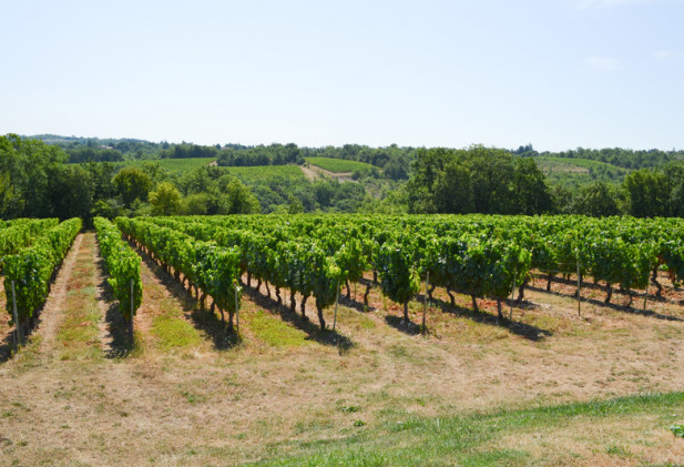 Sur les hauteurs de Cahors, petit domaine viticole de 21 ha dont 6 en vigne