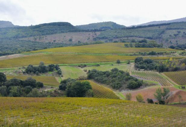 Propriété viticole en cave particulière